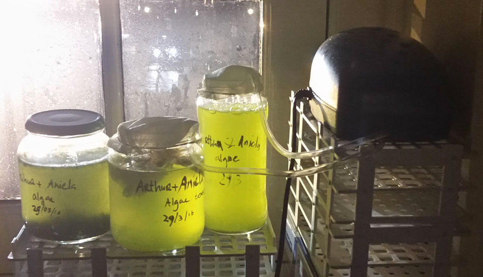 neffa_algae_research_growing